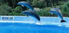 See a Dolphin show at Marineland, Mallorca, Spain.
