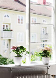 Alféizar interior con plantas. Patio con árboles. Fachadas bonitas.