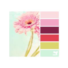 gerbera hues ❤ liked on Polyvore featuring design seeds, colors, backgrounds, color palette and flowers