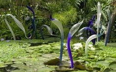 blue herons, glass sculpture instillation by artist Dale Chihuly Sculpture Museum, Sculpture Art, Sculptures, Kew Gardens, Botanical Gardens, Water Gardens, Blown Glass Art, Dale Chihuly, Blue Heron