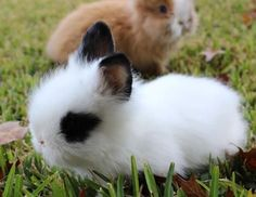 Image result for calico bunny