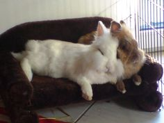 Babe and I Snuggabuggin Funny Bunnies, Baby Bunnies, Cute Bunny, Animals And Pets, Cute Animals, Indoor Rabbit, Bunny Care, Some Bunny Loves You, Bunny Toys