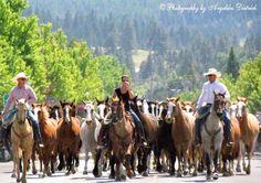 Bucking Horse Stampede coming down Main Street in Joseph, Oregon