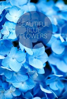 Lifedsign   beautiful blue flowers
