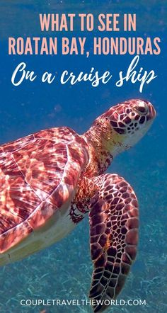 Norwegian Getaway: DIY Shore Excursions in Roatan Bay, Belize City, Costa Maya and Cozumel (with Photos) - Couple Travel The World Cruise Excursions, Cruise Destinations, Shore Excursions, Cruise Travel, Cruise Vacation, Cruise Tips, Family Cruise, Tegucigalpa, Roatan