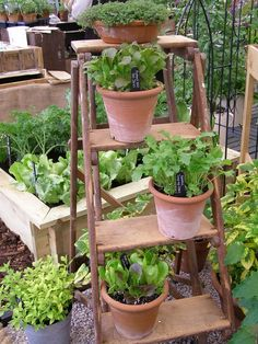 Inspiration for an Urban Kitchen Garden. Tucked... | Wallace Gardens