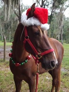 Santa Hat for Horse or Pony -- Next day shipping Equine Santa Claus Hat - Fun Holiday Horse Hat Costume