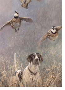 """Flight Path"" -Bobwhite Quail By: John Lester Grouse Hunting, Quail Hunting, Hunting Art, Pheasant Hunting, Hunting Dogs, Deer Hunting, Wildlife Paintings, Wildlife Art, Hunting Pictures"