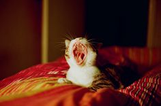Yaaaaaawn....Monday mornings :)