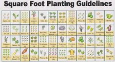 Square Foot Gardening - Planting guidelines