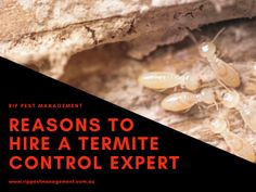 Dealing with termites can be very hard & time-consuming. So, it's better to leave the job to the experts who offer termite control services in Narrabeen. Termite Pest Control