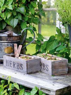 Vintage+Style+Herb+Pots+#herbs+#Garden+#Gardening