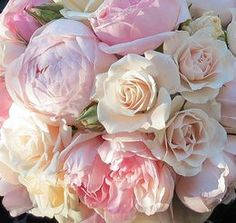 pink wedding flowers blush tones with ivory roses and like pink peonies/ www.callaraesfloralevents.com