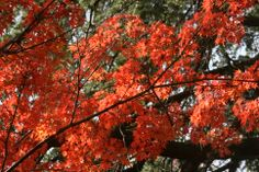 Sonora, CA Fall 2013