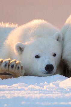 """ Polar Bear Cub ~ by: Tin Man  """