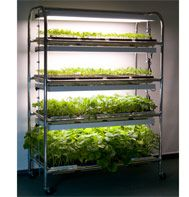 Swooning over the 16 flat grow light system, this is the size I need for all my seedlings each spring.