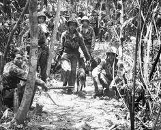 Melinda Cox Hall's Photo: #Marine #Raiders and their jungle-trained Doberman Pinscher dogs #Bougainville move past light machine-gun nest
