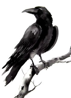 This artwork based on a crow is really dark and looks like it has been done in inks which works well with the image of the crow and it's character.