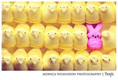 Anything is possible with sunshine and a little pink, Easter Peeps, Happy Easter, Mellow Yellow, Pink Yellow, Marshmallow Peeps, Easter Parade, Anything Is Possible, Pink Lemonade, Candy Colors