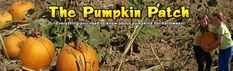 Pumpkin Patch - Everything You Ever Wanted To Know About Pumpkins!