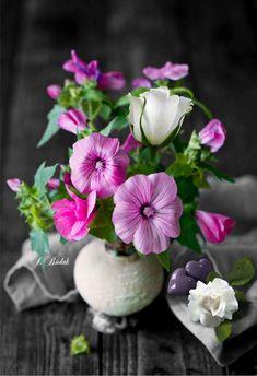 ❥●❥ ♥ ♥ ❥●❥ Splash Photography, Cute Photography, Amazing Flowers, Beautiful Flowers, Flower Vases, Flower Arrangements, Garden Gadgets, Snow Flower, My Secret Garden