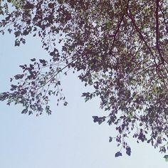#cielo #primavera #natura #love