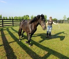 Conditioning and Modifying Horse Behavior - TheHorse.com | An equine behaviorist offers tips on how to change your horse's behavior. #horses #behavior