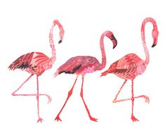 and flamingos