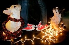 Christmas card ideas and gift ideas for dog lovers