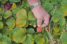 Our Garden Plant Leaves, Club, Activities, Garden, Plants, Garten, Lawn And Garden, Flora, Gardening