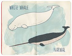 """Check out new work on my @Behance portfolio: """"Whales"""" http://be.net/gallery/45580829/Whales"""