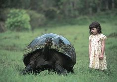 I've seen one of these turtles when I was close to that little girls age. I remember not being afraid of it, if I were to see one now, I wouldn't go near it. Children are fearless.