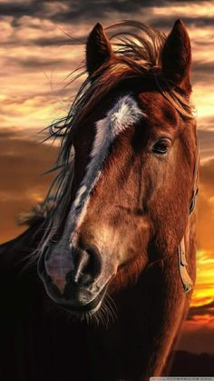 Wild horses are part of nature Most Beautiful Horses, All The Pretty Horses, Animals Beautiful, Cute Horses, Horse Love, Horse Photos, Horse Pictures, Equine Photography, Animal Photography