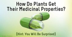 Plants can communicate with each other via extensive and complex networks, and can warn each other of the presence of pests. The biochemical response to insect invasion increases the potency of healing properties. http://articles.mercola.com/sites/articles/archive/2014/10/11/plant-communication.aspx
