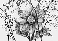 Black&White botanical sketch on Behance