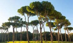 €500,000 set aside to save Rome's pine trees from deadly parasite | Italy | The Guardian Summer Heat, Pine Tree, The Guardian, Climate Change, Royalty Free Images, Over The Years, Rome, The Neighbourhood, Coastal
