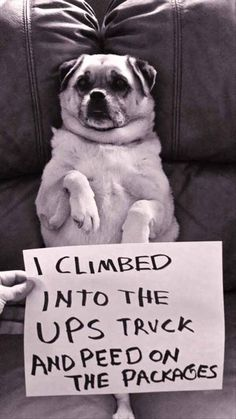 35 Of The Most Hilarious Pet Confessions - BlazePress