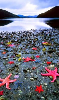Starfish Colony - West Coast New Zealand defplanet.com