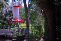 This is a hummingbird feeder and we don't have humming birds, but I wonder if there is something like this suitable for native birds.