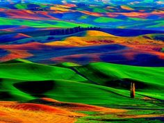 Colorful Palouse Hills, Washington State, USA.  Where a multitude of crops are grown for the world.