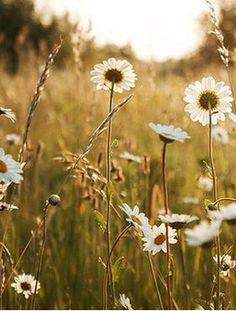 Wild daisies grew everywhere...my favorite flower.