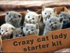 I got: Certified Crazy Cat Lady and Proud of it!! Are You A Crazy Cat Lady?