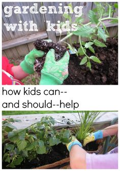 How kids can and should help with gardening. Gardening is a great way to get the kids outdoors and there are so many valuable life lessons to be taught in a thing as simple as having a garden. Best of all, when there is fruit or veggies to eat from all their labor, they are so amazed and feel very special that that is what they helped to grow! #teachmama #gardening #kidsgarden #gardeningforkids #teachingtips #lifelessons #outdoors #outdoorlearning