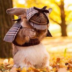 Este coelho é tão elegante que ele tem o seu próprio estilista e fotógrafo pessoal. Veja as fotos!