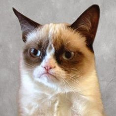 Grumpy cat frowns on your shenanigans. Grumpy cat is not impressed. I wonder if grumpy cat is an engineer. I did find some Grumpy Cat gifs: Grumpy Cat say \ Grumpy Cat Quotes, Funny Grumpy Cat Memes, Funny Animal Memes, Funny Animal Pictures, Funny Pics, Hilarious Memes, Funny Animals, Grumpy Kitty, Funniest Animals