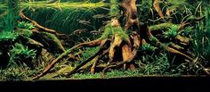 """Shadow's 32g ADA rimless tank """"Passion"""" update:Finally planted with pics- I LOVE this aquascape with the roots and jungle feel"""