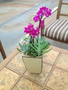 A beautiful orchid, and succulents, made by one of our Flower Shop Designers!