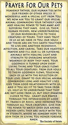 Francis of Assisi Prayer. In the Catholic Church, October 4 is celebrated as the ascension of St. Francis of Assisi. The blessing of our pets is done during this week, at many churches. Francis Of Assisi Prayer, Saint Francis Prayer, St Francis, Catholic Prayers, Catholic Saints, Patron Saints, Catholic Bible, Bible Prayers, Faith Prayer