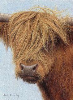 Highland Cow Painting Print By Rachel Stribbling. Wildlife Art / Animal Art.
