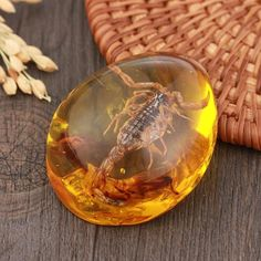 Revered as the first of man's ornamental objects, Amber was used since the Stone Age. It is not a stone, but a resin. However, crystal experts refer to amber as a gemstone or healing crystal due to its chakra energies. Jurassic World, Raw Gemstones, Natural Gemstones, Legos, Curiosity Cabinet, Reiki Stones, Gem Stones, Healing Stones, Amber Price